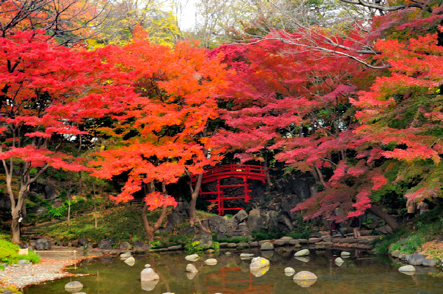 The red bridge of autumn koishikawa korakuen gardens for Jardin korakuen